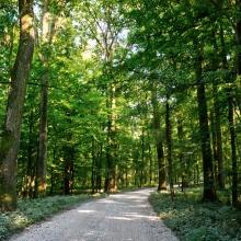 Fotók_Kerékpáros utak bemutatásához_Mura-erdei kerékpártúra